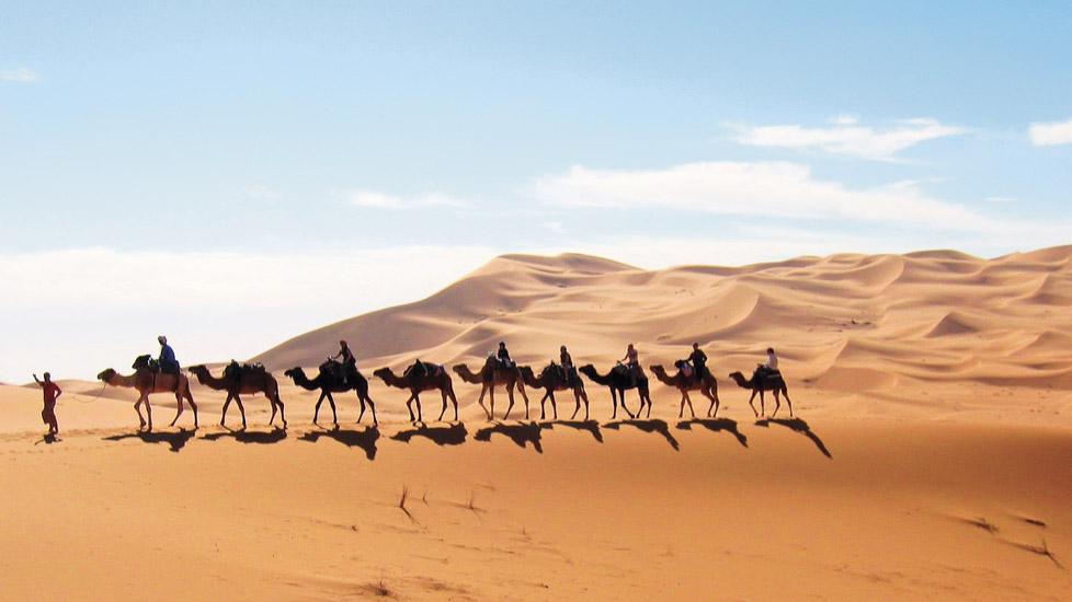Dromadaire Voyages